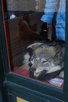Фото 14. Волчья шкура с головой в витрине магазина
