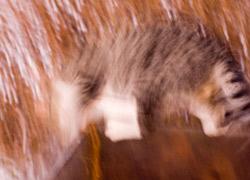 Но мечтам фотографа не суждено было сбыться: как только он начал съемку, кот испугался и убежал